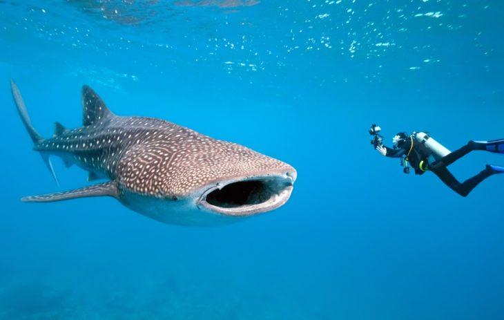 датского египетские акулы фото статье